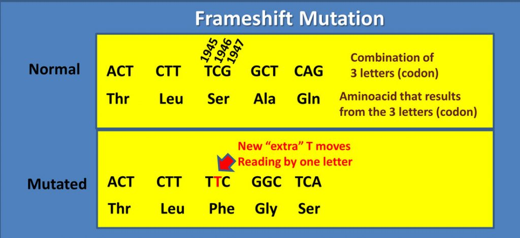 Frameshift-mutation-(1)